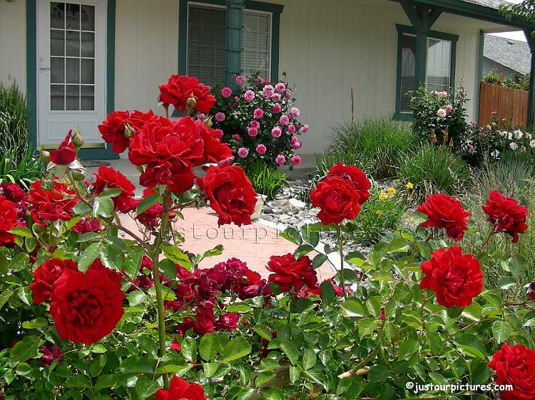 http://justourpictures.com/roses/imgs/garden-spanish-springs-4309.jpg